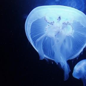 Что делать если ужалила медуза