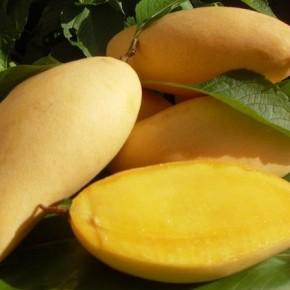 mango-290x290