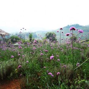 Сад Mon Cham, Чианг Май